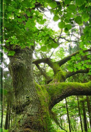 Baum - blanko Art.-Nr.: 41351