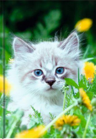 Katze - blanko Art.-Nr.: 41390